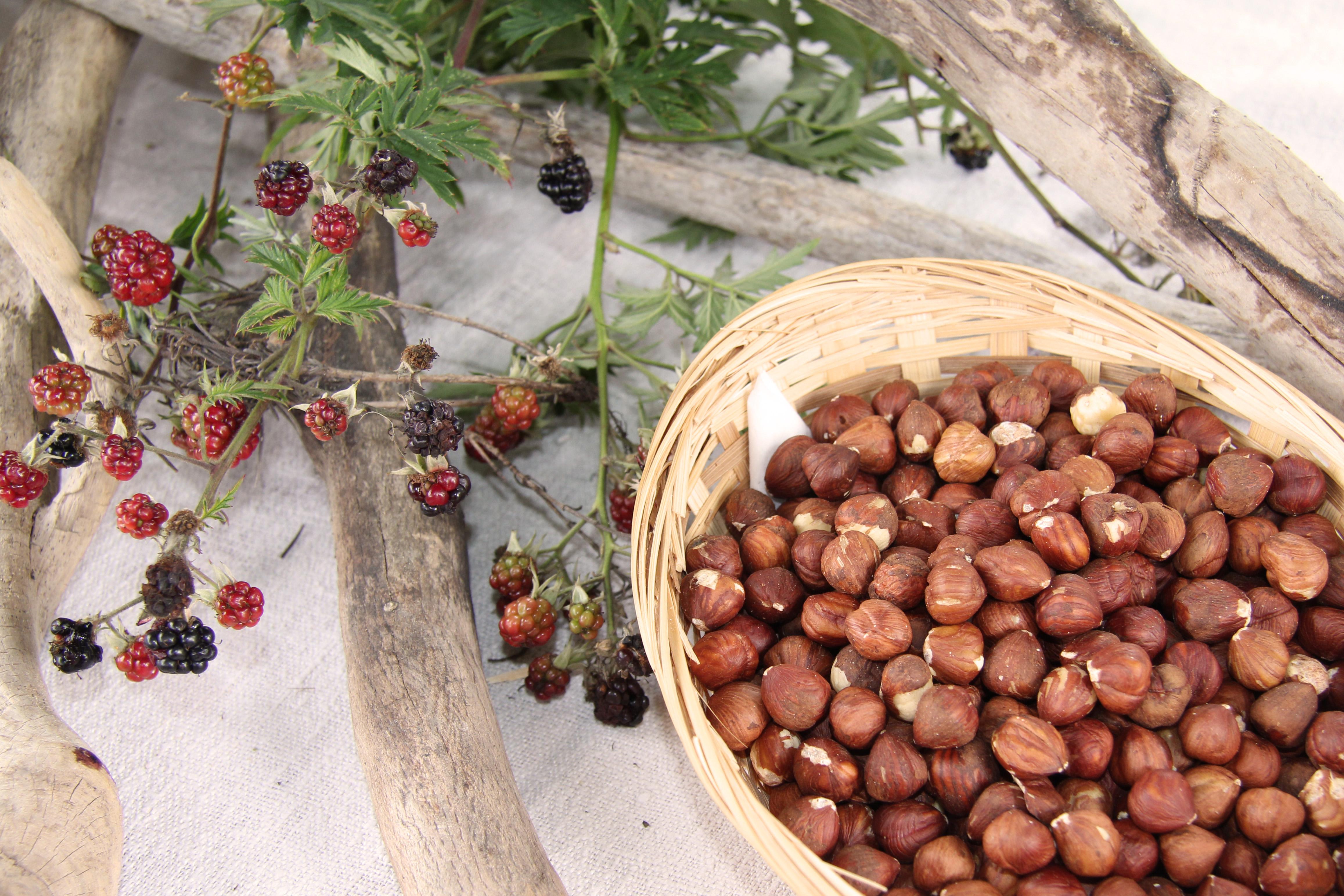 Haselnussschalen und Reste von Beeren zeigen, dass ein großer Teil der Nahrung noch gesammelt wurde.