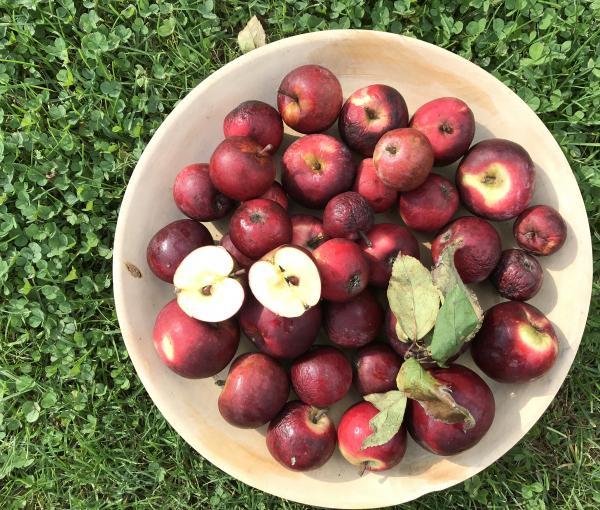 Apfel (Symbolbild)
