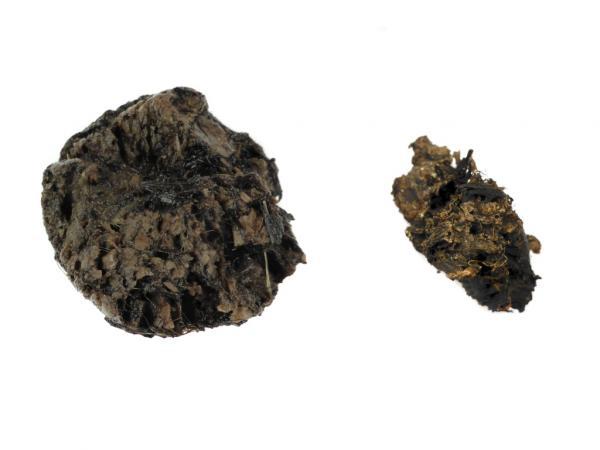 Klassisch nicht konserviert – eine Pfahlprobe im Querschnitt vor und nach dem bloßen Austrocknen ohne Festigung. (Bild: Susanne Heiml)