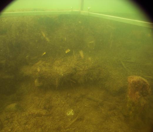 Die Befundsituation unter Wasser - da vermisst man die tollen Sichtverhältnisse am Attersee!