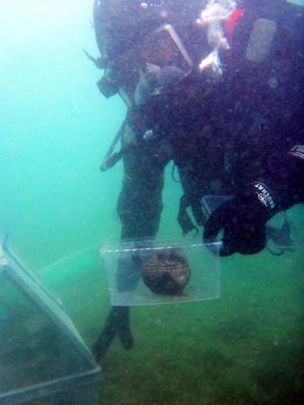Henrik beim Bergen des Mondsee-Kruges unter Wasser. (Bild: Kuratorium Pfahlbauten - G. Knepel)