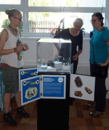 Die Ausstellung in der Volksschule Weyregg ist die größte der drei Ausstellungen in der Gemeinde. (Bild: F. Ostrowski - Kuarorium Pfahlbauten)