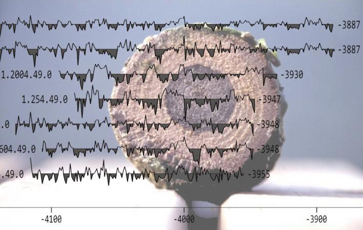 Anhand der Jahresringe eines Pfahles aus der UNESCO-Welterbestätte Keutschach am See konnte eine frühe Bebauungsphase für das Jahr 3947 v.Chr. festgestellt werden. Abgebildet ist ein Pfahl aus der Siedlung und darüber gelegte Jahresringkurven. (Bild: Otto Cichocki - VIAS Universität Wien)
