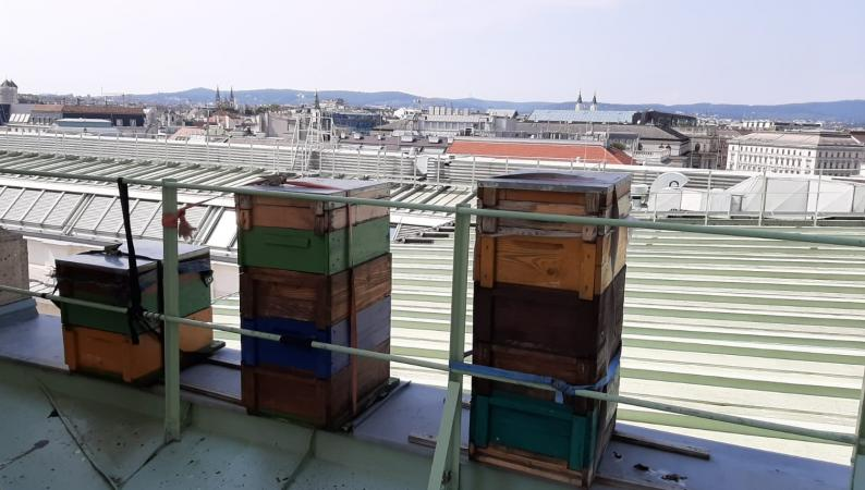 Bienenstöcke am Dach des Naturhistorischen Museums.