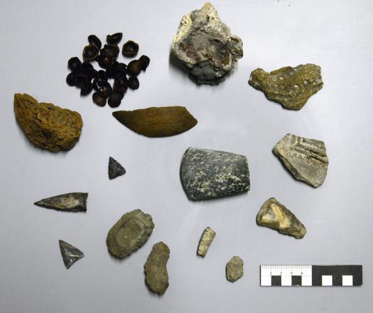 Eine kleine Auswahl der Funde von 2016. Auffällig war unter anderem eine besonders große Anzahl an Haselnussresten. (Bild: Kuratorium Pfahlbauten)