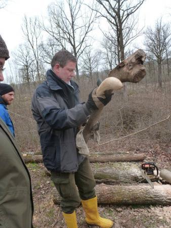 Seit 2011 finden die Ergersheimer Experimente zu Baumfäll- und die Holzbearbeitungstechniken statt. (Bild: H. Windl)
