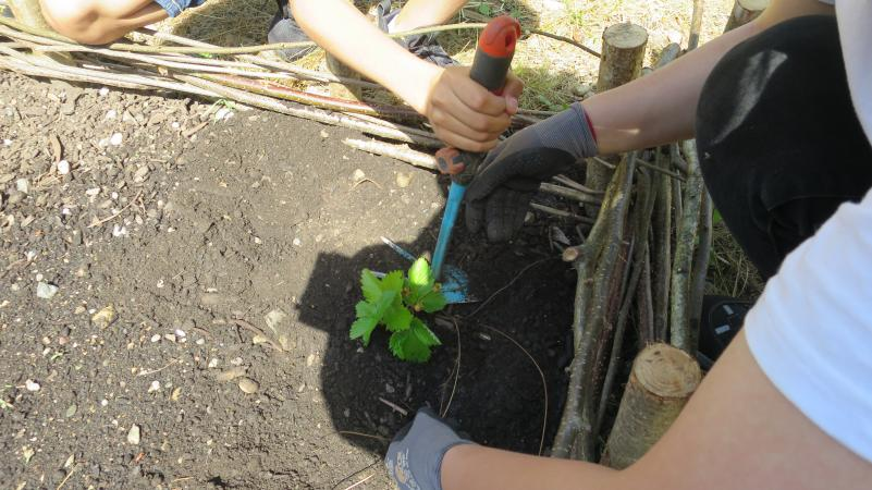 Im Garten wird fleißig gearbeitet. (Bild: Kuratorium Pfahlbauten)