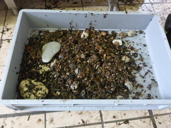 Fundmaterial aus der Grabung in Seewalchen am Attersee. (Bild: H. Pohl - Kuratorium Pfahlbauten)