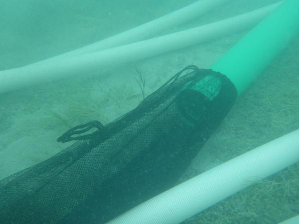 Im Fangnetz sammelt sich alles, was bei der Grabung abgetragen wird. (Bild: Kuratorium Pfahlbauten)