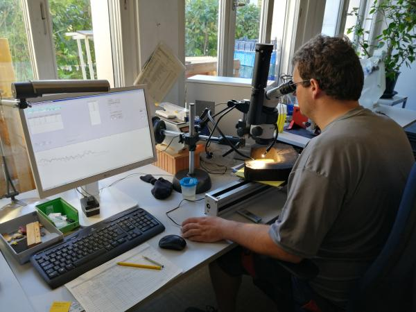 Hemmenhofen ist ein Kompetenzzentrum indem auch dendrochronologische Untersuchungen vorgenommen werden. Foto: Helena Seidl da Fonseca