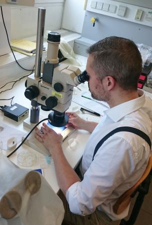Zunächst wird der Fund unters Lichtmikroskop wandern. (Bild: A. G. Heiss)