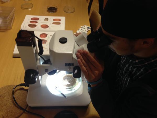 Betrachtung von Probenmaterial aus der Pfahlbausiedlung Seewalchen I (Bild: Kuratorium Pfahlbauten)
