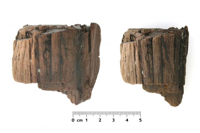 Probenmaterial von archäologischem Nassholz. Links direkt nach der Bergung, rechts nach 2 Wochen Trocknung an der Luft. Der Volumenschwund ist deutlich sichtbar. (Bild: Oberösterreichisches Landesmuseum - Kuratorium Pfahlbauten)