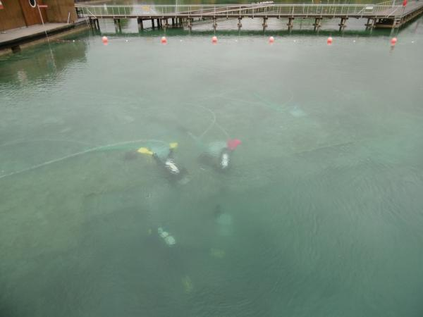 An der rechten Seite unserer Taucherinnen mit den gelben und roten Flossen zeichnen sich die dunklen Fundkörbe - zugegebenermaßen ein wenig undeutlich - ab. (Bild: Ostrowski - Kuratorium Pfahlbauten)