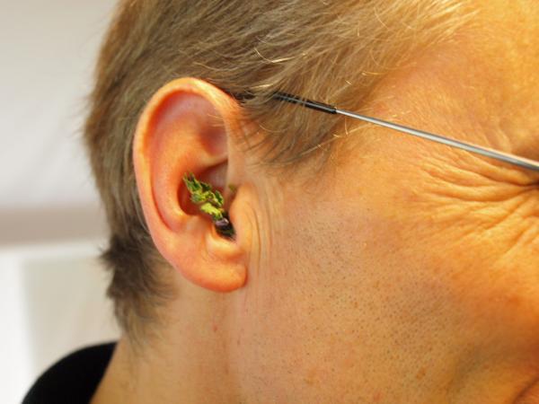 Kräuter zur Vorbeugung gegen Ohrenschmerzen. (Bild: Kuratorium Pfahlbauten)