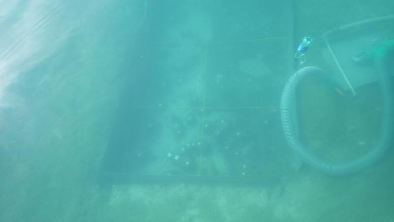 Hoffen wir, dass Herr Schrenk heute einen ebenso guten Blick vom Boot aus auf die Grabungsfläche hat, wie Boris gestern. (Bild: Kuratorium Pfahlbauten - B. Kiefer)