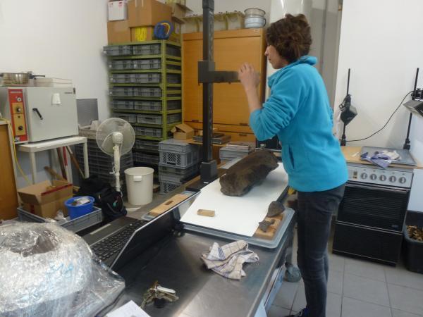 Die geborgenen Pfähle werden vor der Konservierung noch genau vermessen und dokumentiert. (Bild: Kuratorium Pfahlbauten)