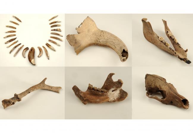 Tierknochen-Funde weisen Haustiere und Jagdwild nach.